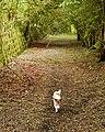 A shady bridleway (1) - geograph.org.uk - 1304987.jpg