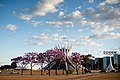 Aberta a temporada de ipês roxos em Brasília (41030202650).jpg