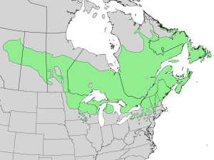 Abies balsamea range map 3.png