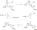 Acetylcholinesterase Mechanism.png