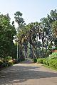Acharya Jagadish Chandra Bose Indian Botanic Garden - Howrah 2011-01-08 9889.JPG
