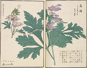 Kawahara Keiga - Image: Aconitum napiforme トリカブト、カブトグサ、タンナトリカブト 、ウンゼントリカブト