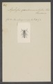 Agallissus - Print - Iconographia Zoologica - Special Collections University of Amsterdam - UBAINV0274 033 22 0007.tif