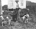 Alaska Native man surrounded by dogs in front of house, Wrangell, Alaska, 1891 (AL+CA 8257).jpg