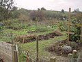 Allotments Herd Lane Tetbury - geograph.org.uk - 276797.jpg