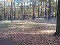 Alter Branitzer Dorffriedhof im Vorpark.JPG