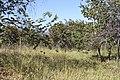 Alto Araguaia - State of Mato Grosso, Brazil - panoramio (270).jpg