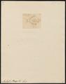 Ambassis ranga - 1807-1822 - Print - Iconographia Zoologica - Special Collections University of Amsterdam - UBA01 IZ13000022.tif