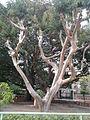 Ammaging tree1.jpg