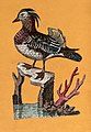 An unidentified water bird. Coloured etching. Wellcome V0022374.jpg