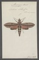 Anceryx - Print - Iconographia Zoologica - Special Collections University of Amsterdam - UBAINV0274 062 05 0002.tif