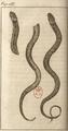 Andry - De la génération des vers (1741), planche p. 285.png