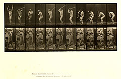 Animal locomotion. Plate 308 (Boston Public Library).jpg