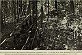 Annual report (1909) (14565109089).jpg