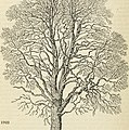 Arboretum et fruticetum britannicum, or - The trees and shrubs of Britain, native and foreign, hardy and half-hardy, pictorially and botanically delineated, and scientifically and popularly described (19744938742).jpg