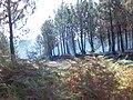 Arde Galicia.jpg