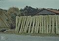 Arundo donax canes cut for splitting for vine poles (24441885848).jpg