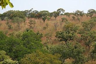 Kourtiagou Reserve - Tree savannas of the Atacora mountains in the Kourtiagou reserve
