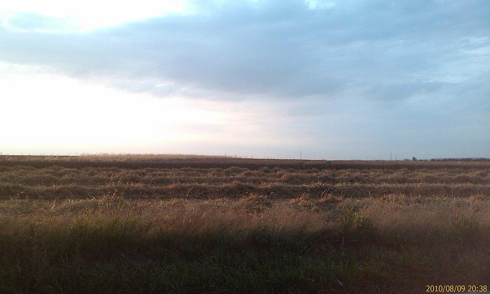 Au bord des champs