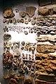 Augsburg Naturmuseum - fossils 2.jpg