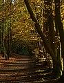 Autumn Arrives - geograph.org.uk - 1032368.jpg