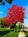 Autumn in Madison - panoramio.jpg
