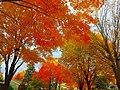 Autumn in Madison - panoramio (18).jpg
