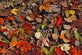 Autumn leaves - Herbstlaub.jpg