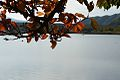 Autumn leaves at Lake Shoji.jpg