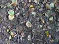 Autumn on the Clyde Walkway (2938988877).jpg