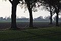 Bäume - panoramio (4).jpg
