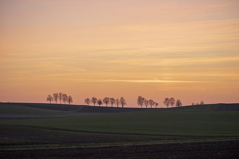 File:Bad Rappenau - Bonfeld - Baumreihe nördlich vom Dorf im März 2.jpg
