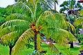 Bali - panoramio (11).jpg