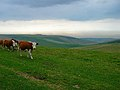 Balsdean Bottom from the South Downs Way - geograph.org.uk - 51635.jpg