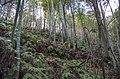 Bamboo forest - panoramio (2).jpg