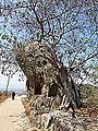 Barabar Caves - Rock Shrine (9224662443).jpg