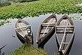 Barcos na Pateira.jpg