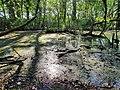 Barn Coppice, Graylands Horsham. Pond.jpg