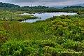 Beaver Pond at Camp 71 (6803408089).jpg