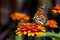 Bee Dreams (2378430576).jpg
