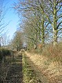 Beeches on track to Knoll Farm - geograph.org.uk - 117814.jpg