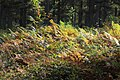 Belle Forêt (232209731).jpeg