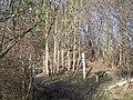 Bench on footpath in Nunstead Wood - geograph.org.uk - 1147576.jpg