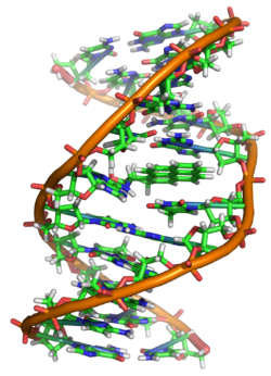 Benzopyrene, the major mutagen in tobacco smoke, in an adduct to DNA.