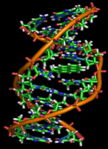 """När benso[a]pyren kan binder till någon kvävebas i DNA-molekylen bildas en """"knyck"""" som gör att DNA-molekylen kommer att läsas av felaktigt nästa gång den kopieras."""