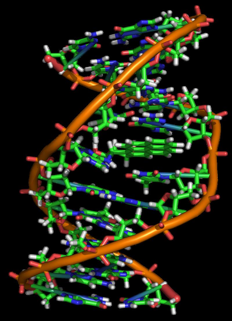 addotto di DNA