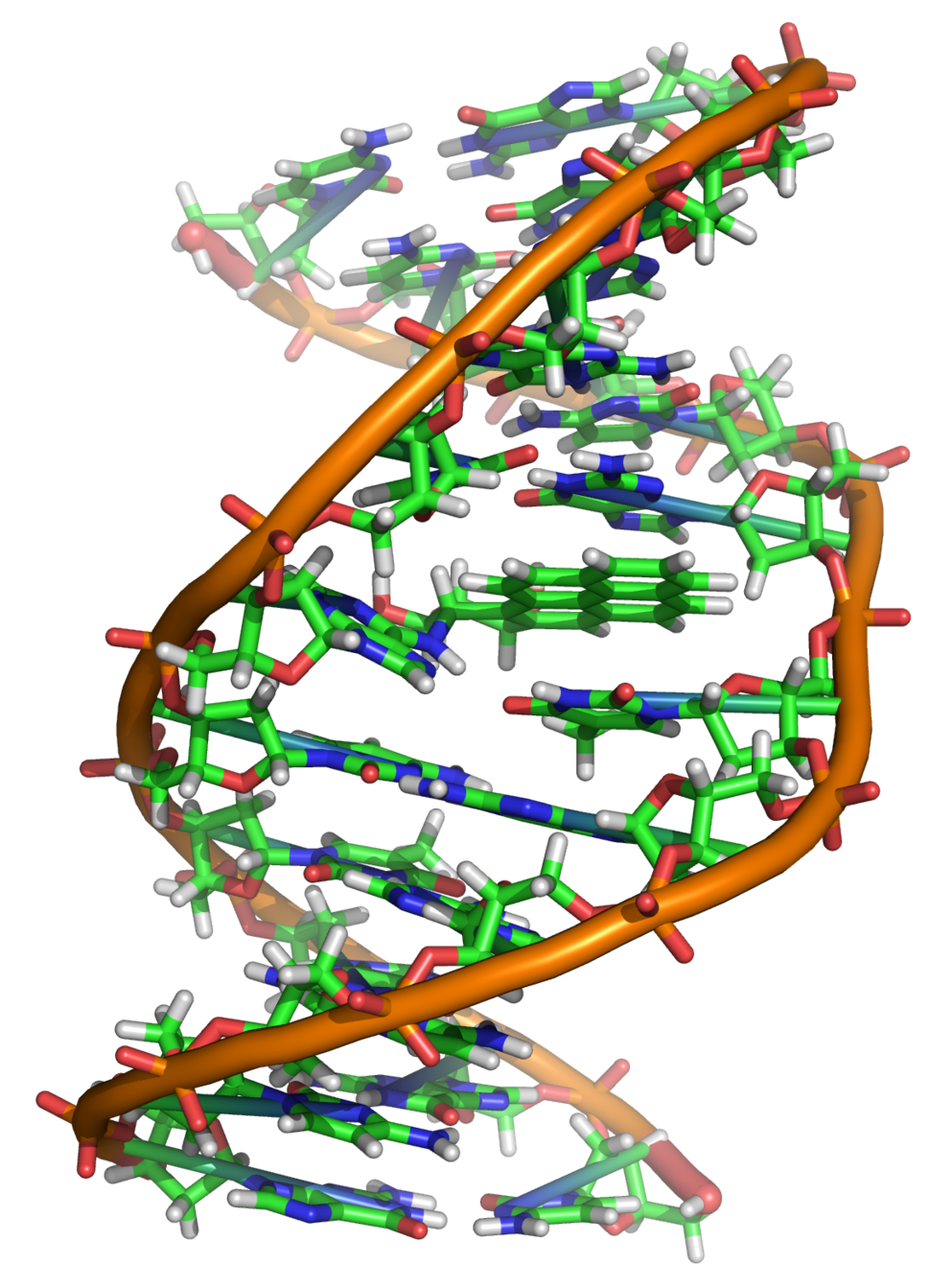 Benzopyrene DNA adduct 1JDG