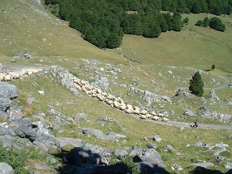 Fichier:Berger pyrenees.jpg