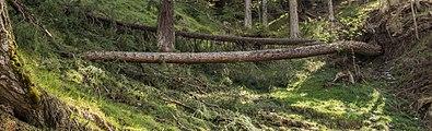 Bergtocht van Tschiertschen (1350 meter) via de vlinderroute naar Furgglis 04.jpg