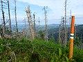 Beskid Żywiecki 15 - panoramio.jpg